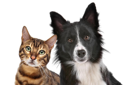 Low­-Cost Clinics for Rabies Vaccines & Spay/Neuter Vouchers at FCAC
