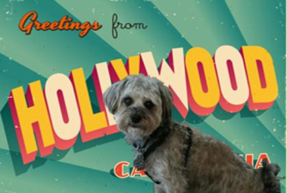 Our Favorite (K-9) Movies About Dogs