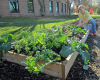 Raised Bed Gardening in Walkertown February 18