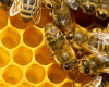 Forsyth County Beekeepers Association Bee School