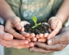 Help Our Community Grow: Become a Community Garden Mentor!