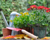 Free Fall Container Gardening Seminar