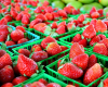 Strawberry Season in North Carolina