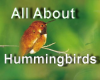 Learn All About Hummingbirds with Liz Schmid