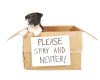Forsyth County SPAY DAY - A One Day Event!