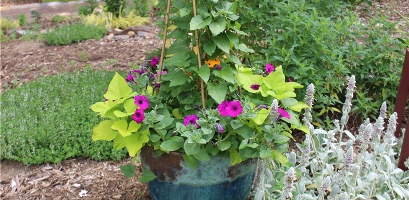 Join Extension to Learn About Container Gardening!